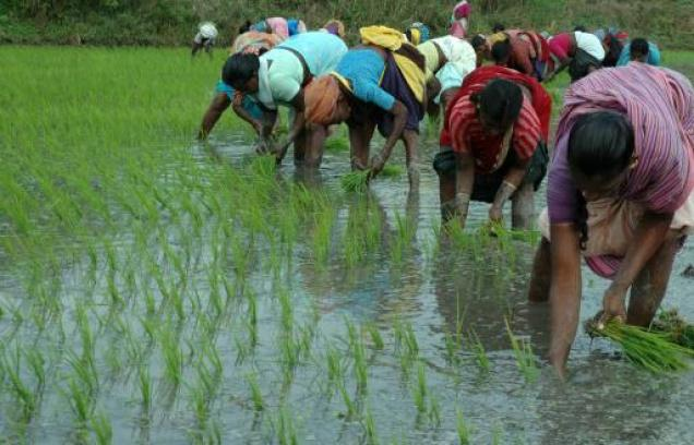 agriculture and allied activities Rural indian women are extensively involved in agricultural activities   agriculture and allied activities almost take the equal time and energy at par with.