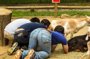 la-sci-sn-peeing-mammals-bladder-animals-urination-bioinspired-20140624